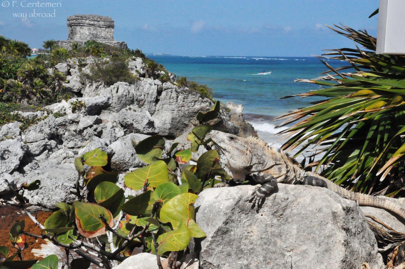 Lo Yucatan e le sue meraviglie