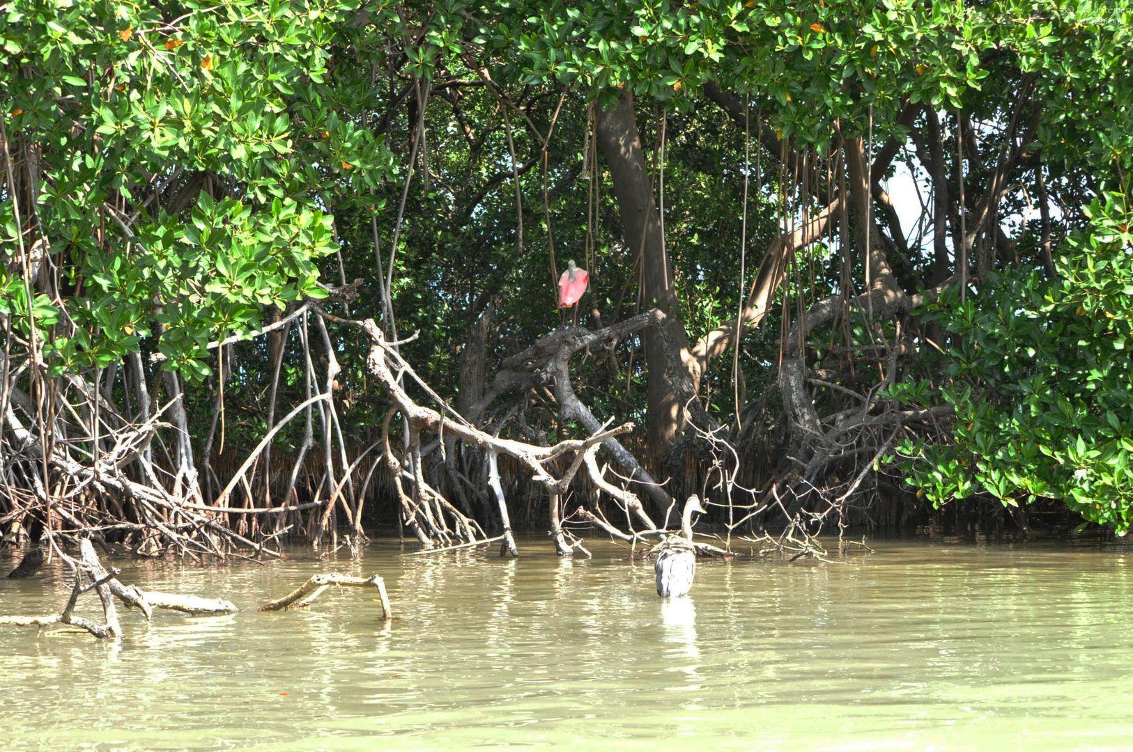 Foresta di mangrovie