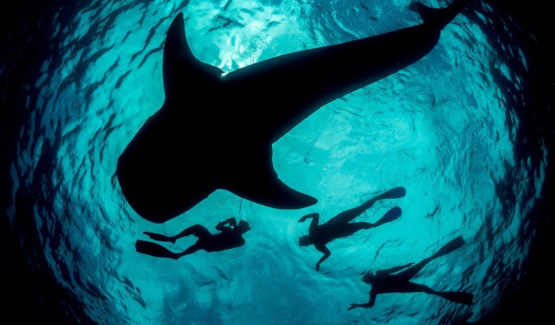 Squalo balena, © www.islamujeres.com