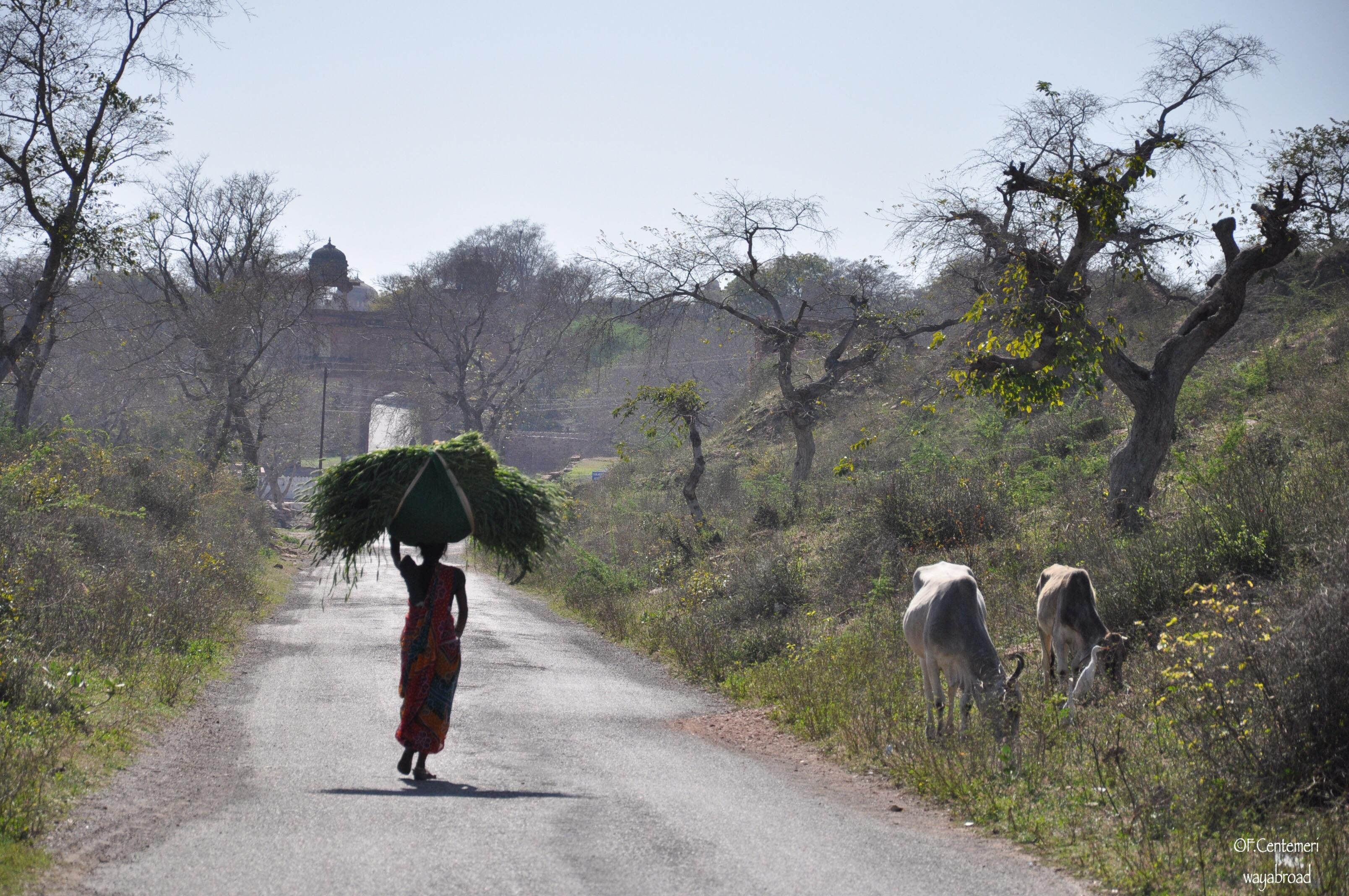 L'essenza del Rajasthan, terra dei maharaja