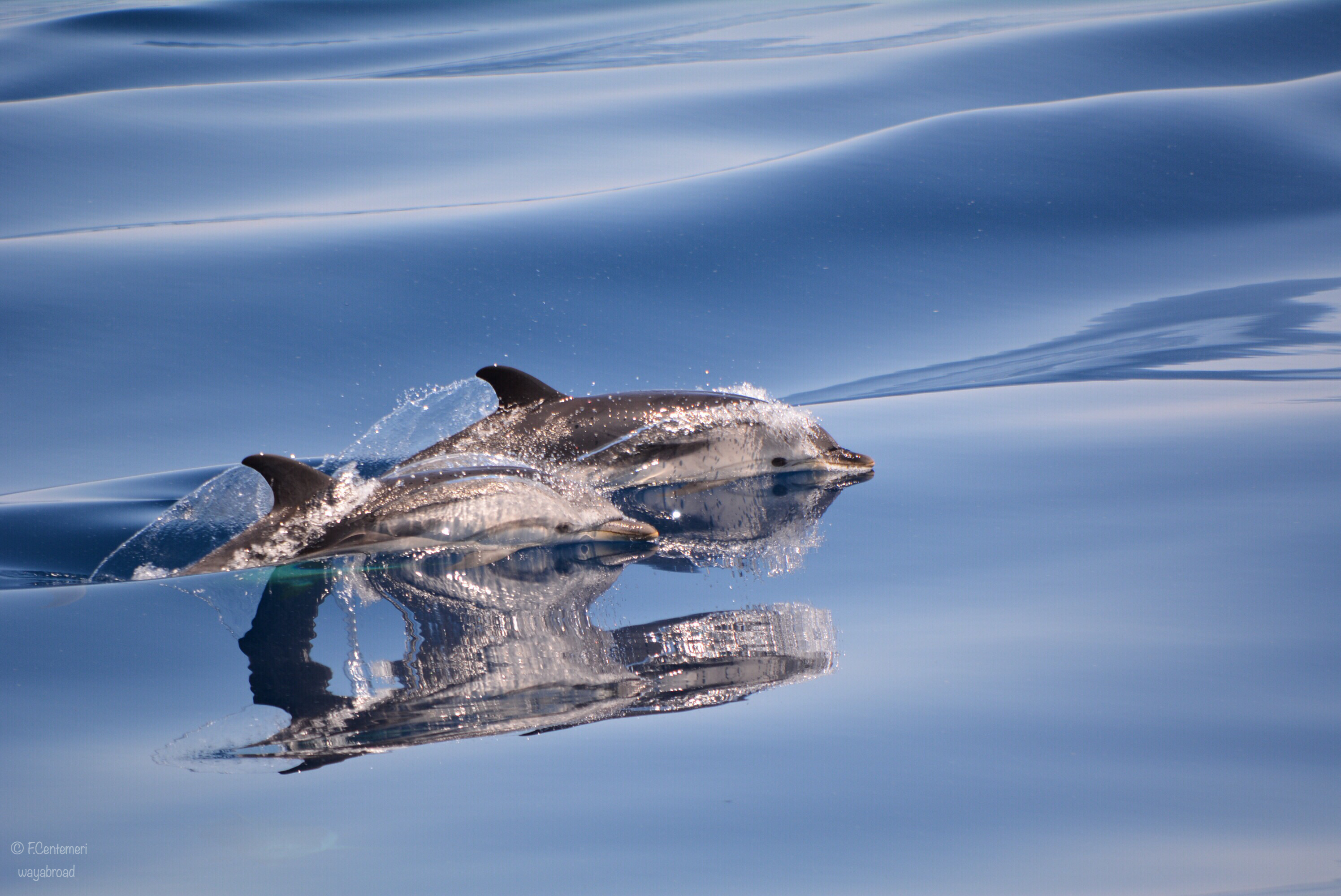 Whalewatch Genova: avvistamento cetacei al largo di Genova!