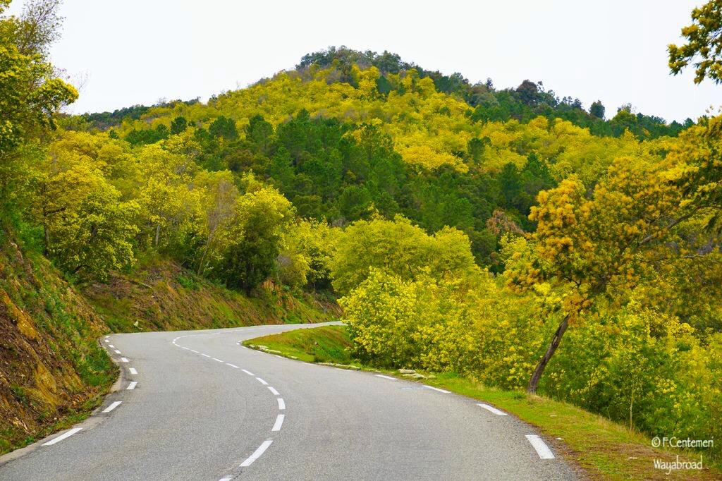 La Strada della mimosa: alla scoperta del Sud della Francia in inverno!