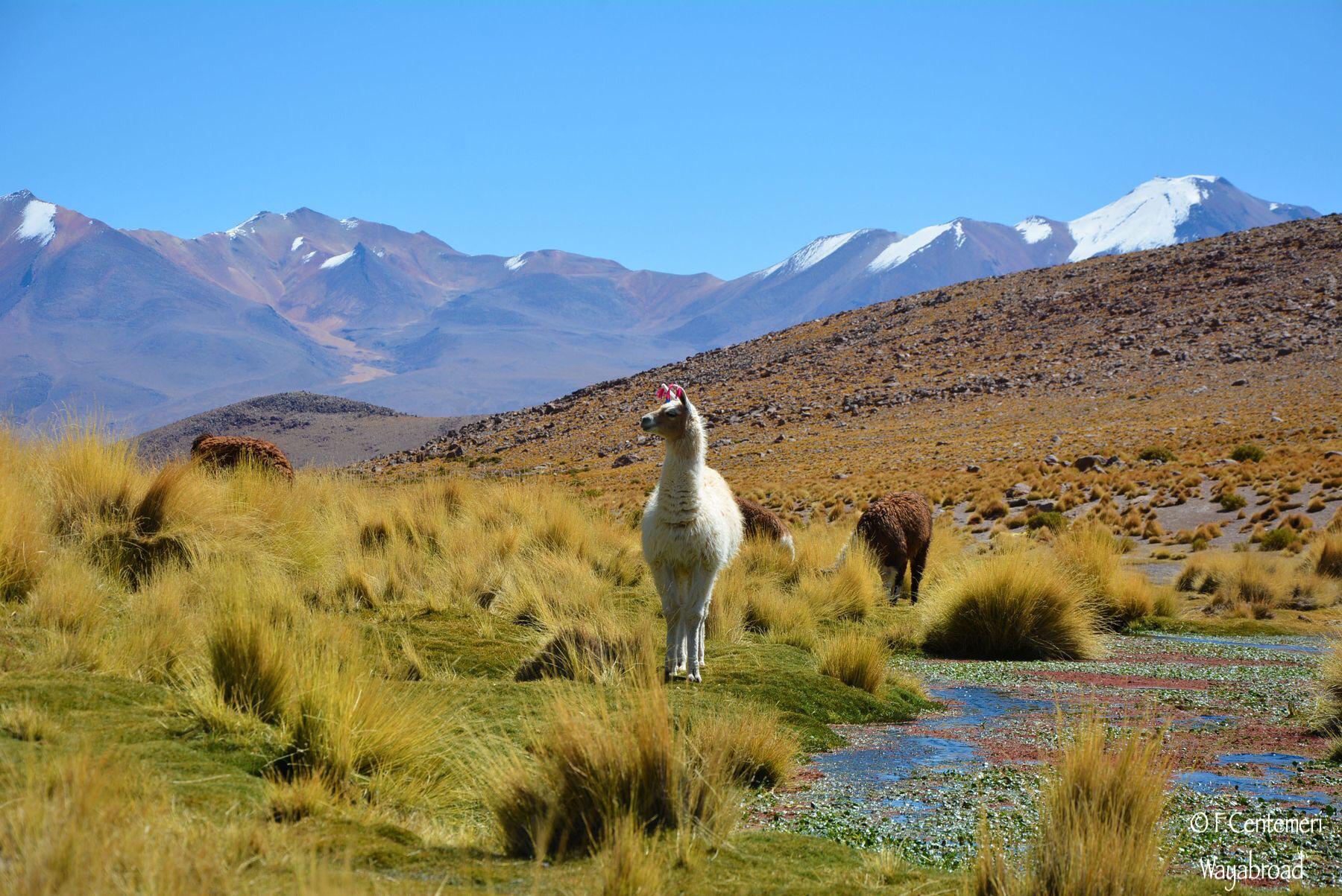 Quando andare e cosa portare in BOLIVIA