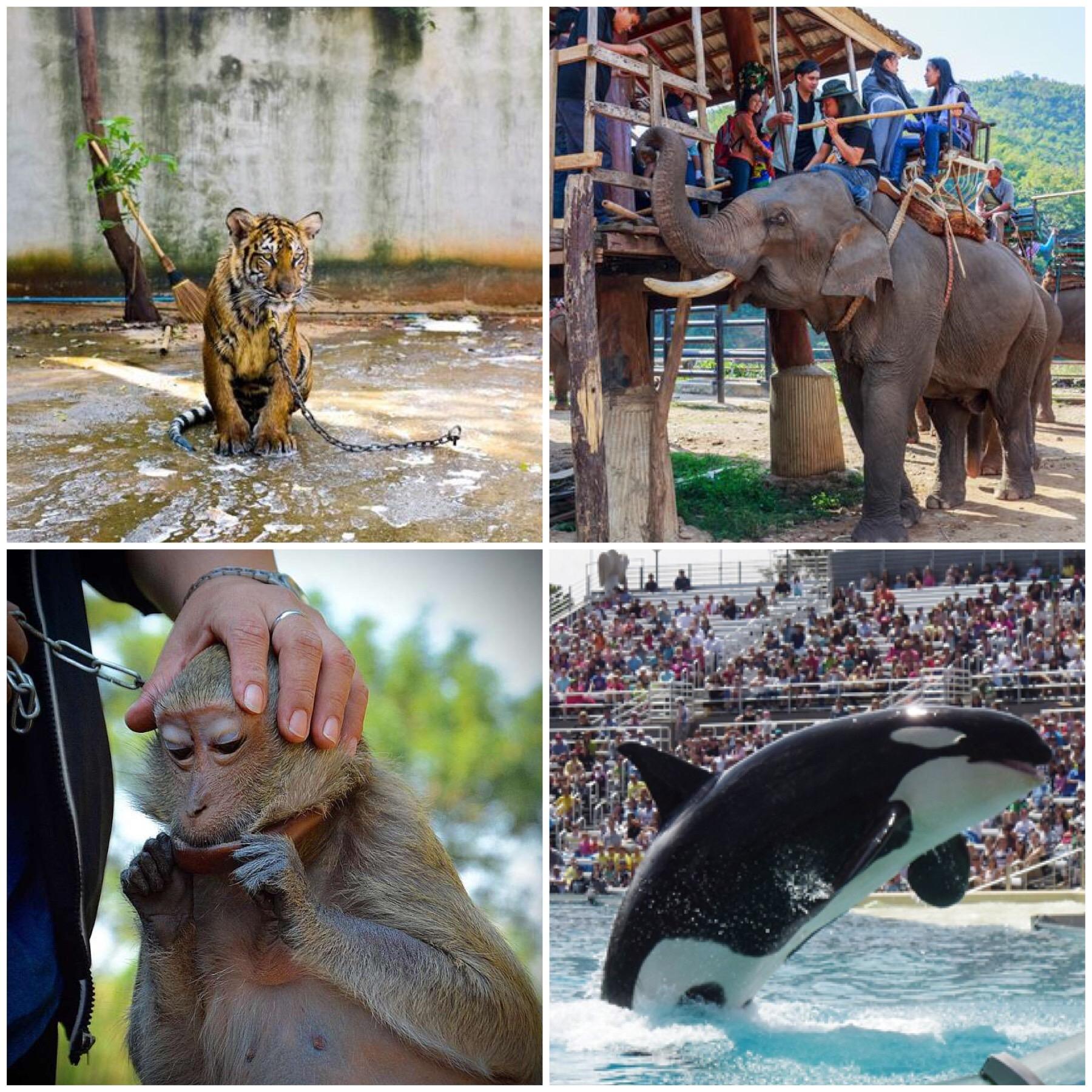 Tour con animali nel mondo: i casi di maltrattamento e turismo insostenibile