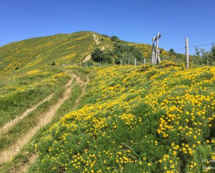 Trekking sul Monte Ebro